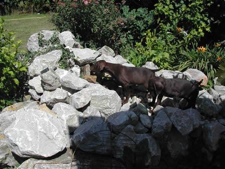 cuccioli luglio 2011c