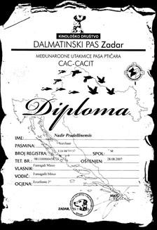 diploma_nadir_pradellinensis_2
