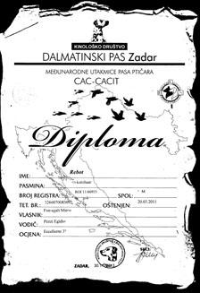 diploma_rebot_1